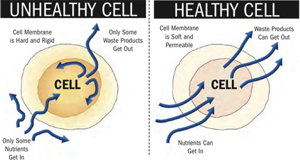 healthy-unhealthy-cells