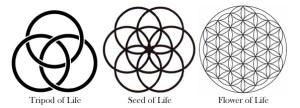 Web=tripod-seed-flower